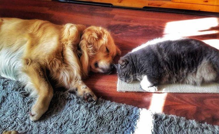 Dog❤ And Cat Sleeping Animal Themes Indoors
