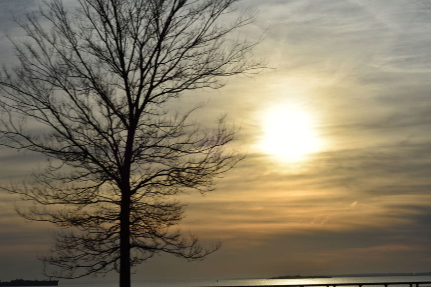 Bare Tree Cloud - Sky Dramatic Sky Journalcx Light Majestic Outdoors Scenics Silhouette Sky Tranquil Scene Tranquility