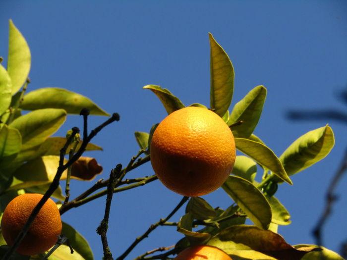 Orange from