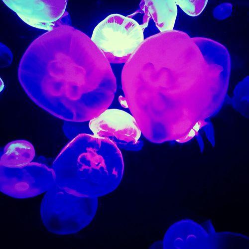 Aquarium Jellyfish Beautiful Enjoying Life