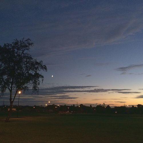 Sunset Park Nature