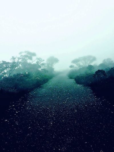 Mt William Australia First Eyeem Photo People And Places Misty Mountain Dark Path Trees Bushes Mystic Mysterious Blue Grean Cold Wet Winter
