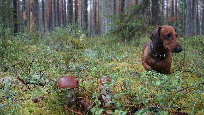 September Mushroom Осень 🍁🍂 Russian Nature собака My Dog Autumn грибы Very Beautiful ленобласть