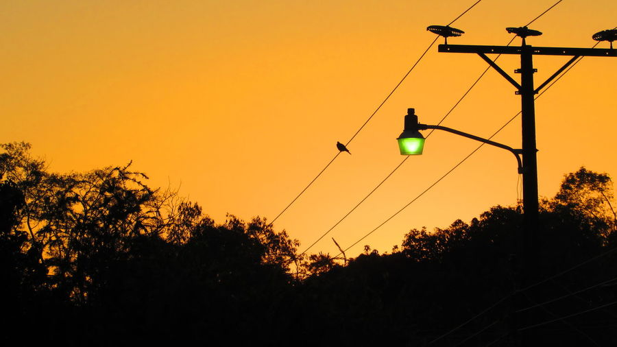 Beauty In Nature Cable Clear Sky Dark Growth Majestic Nature No People Non-urban Scene Orange Color Outdoors Outline Power Line  Remote Scenics Silhouette Sky Solitude Sun Sunset Tranquil Scene Tranquility Tree Vibrant Color