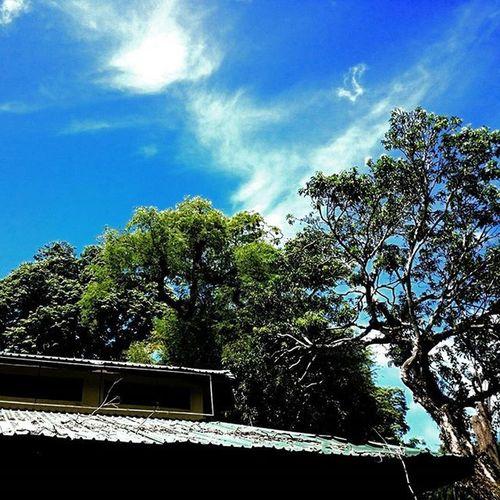 NATURE 🍃 Nature Green Blue Cloud Sky