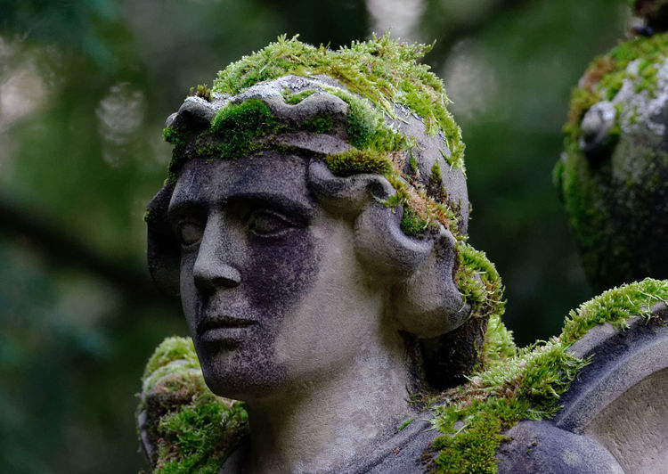 Close-up of mossy statue