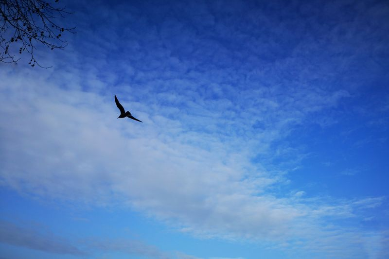 Fly High Blue Sky Ooo Seemooore Huawei P20 Pro P20 Leica Lens Mobilephotography Photooftheday P20pro Photography Bird Flying Mid-air Blue Silhouette Journey Sky Flight Spread Wings Seagull Sea Bird