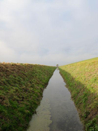 Nature Agriculture Grodenlandschaft Deichvorlandschaft