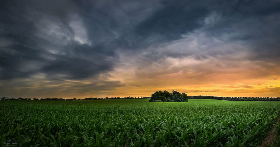 Agriculture Beauty In Nature Cereal Plant Cloud - Sky Crop  Day Farm Field Freshness Green Color Growth Landscape Nature No People Outdoors Rural Scene Scenics Sky Sunset Tranquil Scene Tranquility