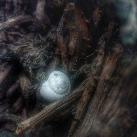 Caracol Caracol 😝 Raizes Nature Nature_collection Nature Photography Naturelovers Natureza Natureza 🐦🌳 NaturezaMaravilhosa Natureza Nature ♡