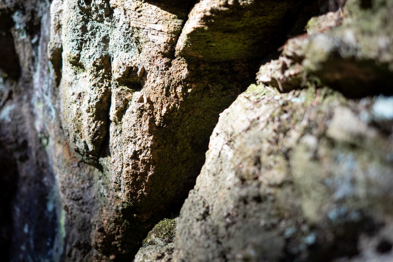 selective focus, rock, close-up, solid, no people, rock - object, textured, day, nature, moss, plant, rough, tree, outdoors, full frame, pattern, growth, tree trunk, rock formation, trunk