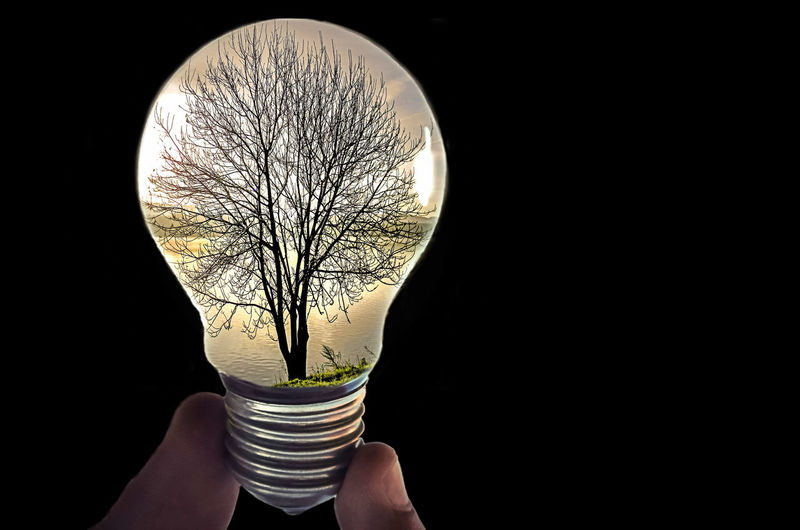 Creativity Edit No Edit No Fun Trying New Things Creative Light And Shadow Glass - Material Light Light And Shadow Lightbulb Shining Single Object Still Life Tree Art Is Everywhere Rethink Things Human Hand Black Background Visual Creativity