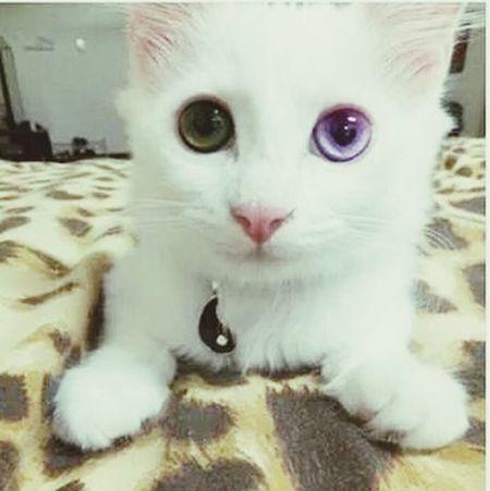 Cat Neko Meow🐱