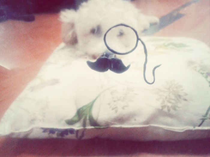willow has grown a mustache! :D awwe time♥ Dog I Love My Dog Playing With The Animals Hey Willow