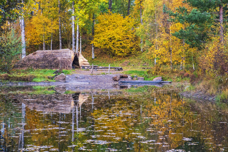 View of lake in forest during autumn
