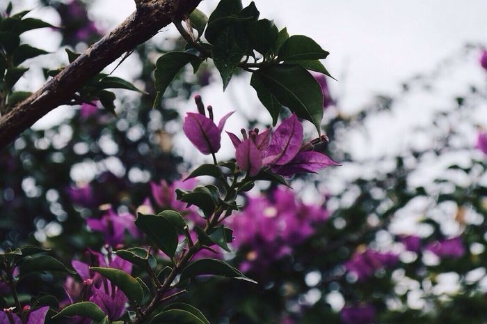 Freshness Flower Beauty In Nature Nature Springtime Growth