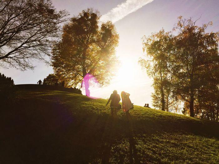 Global Eyeem Adventure - Stuttgart Nature Sun Autumn Colors