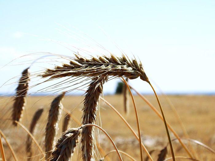 Aridity Drought