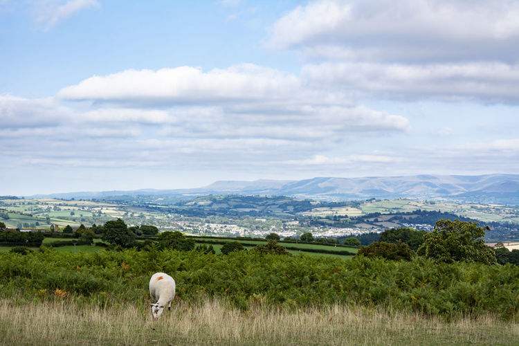 Brecon Beacons Brecon Beacons Brecon Beacons National Park Landscape_Collection Stock Photography Cloud - Sky Grass Hills And Valleys Land Landscape Landscape_photography Mountain Nature Outdoors Plant Sheep Sky Stockphoto