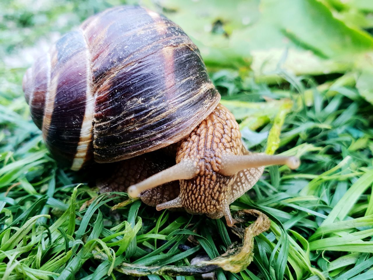 CLOSE-UP OF SNAIL IN A GRASS