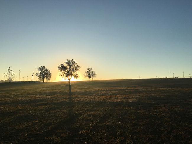 Sunrise silhouette Morning Light Silhouette Tree Landscape Light And Shadow Shadows Sky Sun Sunrise