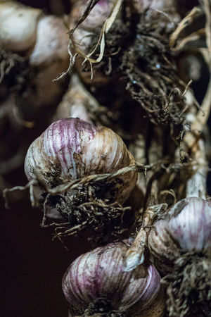 Close-up Day Focus On Foreground Food Food And Drink Freshness Garlic Hanging Healthy Eating Indoors  Ingredient Nature No People Raw Food Selective Focus Vegetable Wellbeing