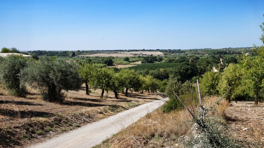Agriculture Tree Crop  Rural Scene Outdoors Scenics Landscape Eye4photography  Olive Trees Almond Trees Sicily Sicilia Tranquil Scene Olive Tree Olives