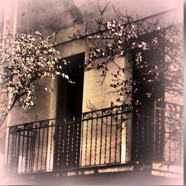 Spring / Primavera Balcons Edificis Arbres