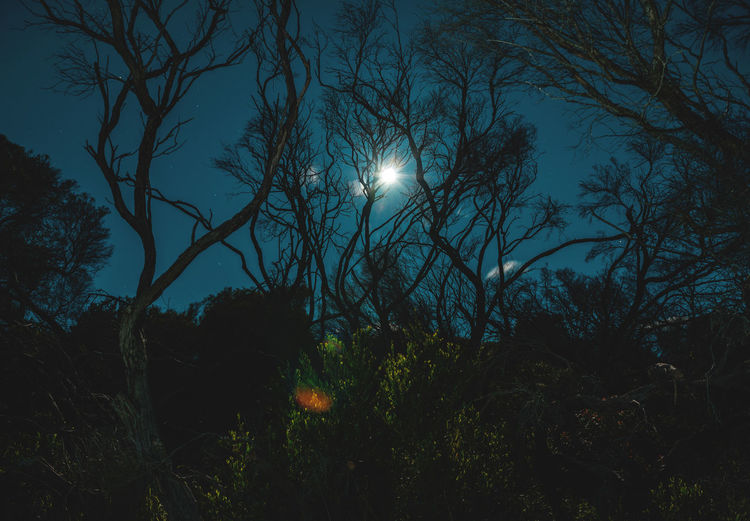 Moon Nights Sydney Longtime Exposure MoonNights Nature Nightphotography Dark Blue Darkness And Light Forest Full Moon Fullmoon Haunting  Landscape Longtimeexposure Low Angle View Moon Moonlight Mysterious Night Night Scenery  Night Sky Nightscape Outdoors Sky Stars Sydney Tree