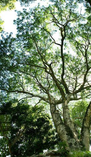 TreePorn.!!