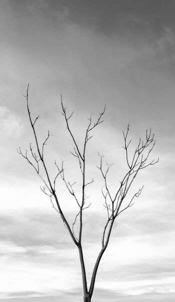 Loneliness Lonely Winter Bare Tree Beauty In Nature Black And White Blackandwhite Branch Cloud - Sky Cold Day Lonely Tree Nature No People Outdoors Sadness Sky Tranquility Tree