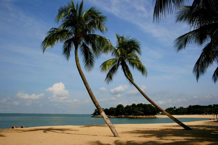 A palm lined beach at Sentosa island in Singapore ASIA Travel Photography Beach Beauty In Nature Cloud - Sky Day Growth Horizon Over Water Nature No People Outdoors Palm Tree Sand Scenics Sea Sentosa Island Sky Tourist Destination Tranquil Scene Tranquility Tree Tree Trunk Water