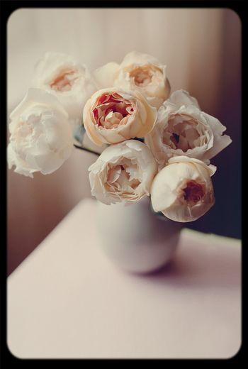 Beauty Nice Flowers