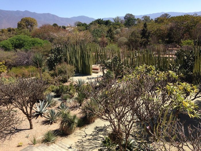 Beauty In Nature Cactii Cactus Cactus Garden Day Growth High Angle View Landscape Nature No People Outdoors Plant Sky Succulents SucculentsLover Sunlight Tranquil Scene Tranquility Tree