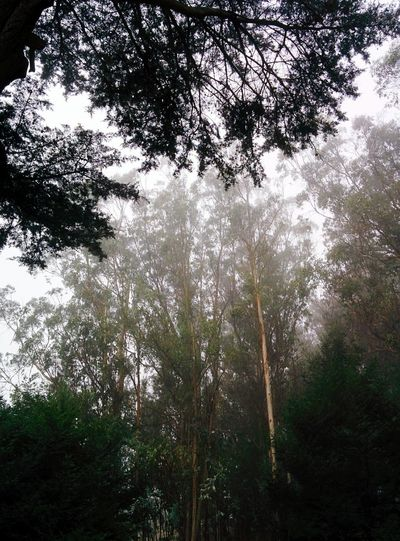 Outdoors Forest Morning Walk Nature Fog