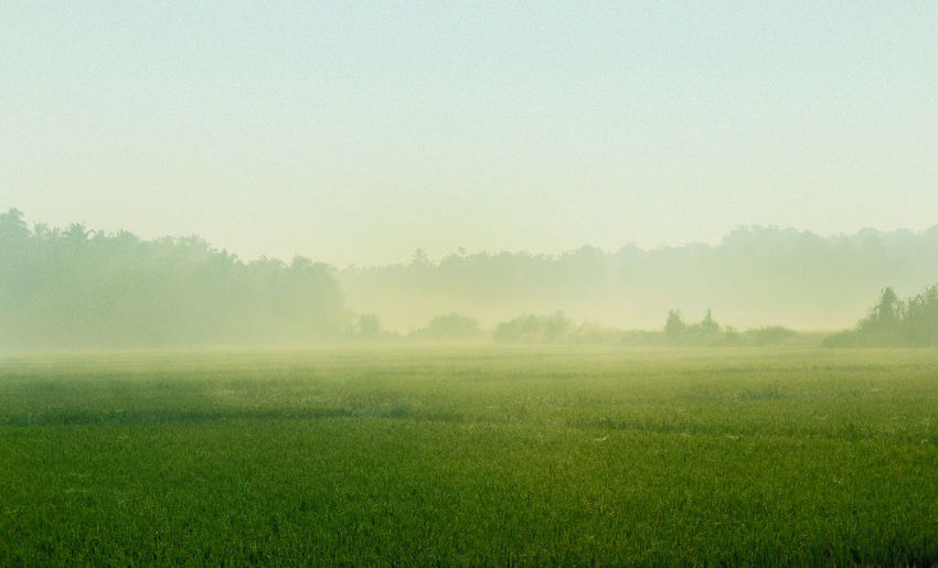 Nature Beauty In Nature Grass Winter No People Green Color Field Tree Freshness Fog Landscape Rural Scene Outdoors Scenics Day Sky