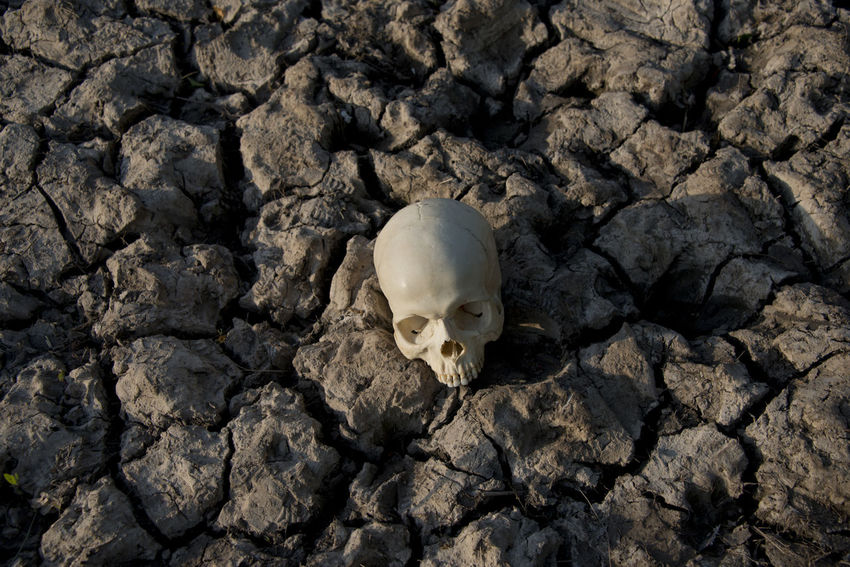 A human skull on parched earth Bones BonesExposed Crime Drought Earth Fossil Fossils Murder Skeleton Crimes Criminal Detective Droughtsummer Ground Homicide Homicides Mud Murder Scenes Murders Novel Parched Parched Earth Skeletons Skull Skulls