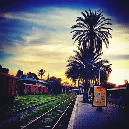 Chlef-Algerie Palm Tree Sky Tree No People Outdoors Built Structure Day Palm Tree Chlef Chlef 😍 Algeria Beauty In Nature EyeEm Vacations Relaxation Algeria Photography Algérie Nature Architecture Scenics Alger EyeEm Best Shots EyeEm Nature Lover EyeEm Gallery Train Station