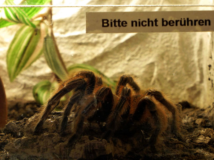 Do Not Touch!..ok😄 I'm Not Afraid Insects And Spider-exhibition Really Big Spider🕷😎 Spider