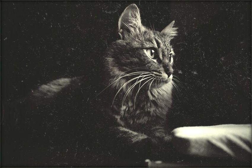 Cat Relaxing Enjoying Life Animal