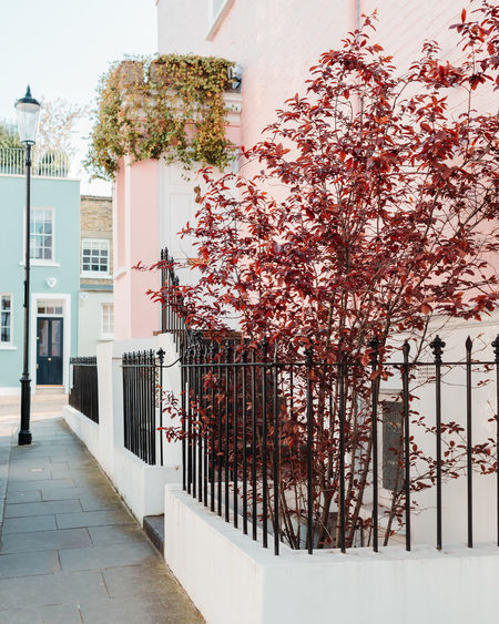 Nothing Hill Outdoors Architecture Built Structure Plant Building Exterior Tree Building Nature Growth Day Flowering Plant Flower No People City Residential District Boundary Barrier White Color House Fence Cherry Blossom Cherry Tree