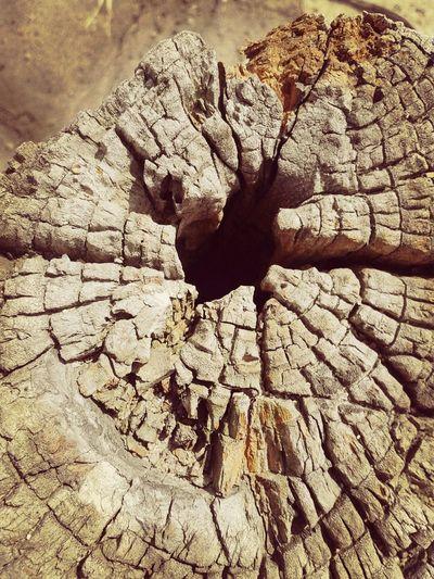 Cracked stump Nature Tree Stump First Eyeem Photo