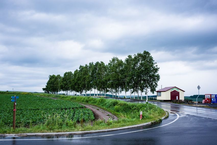 Plant Cloud - Sky Sky Tree Nature Road Day Green Color Street No People Outdoors Beauty In Nature Grass Hedge