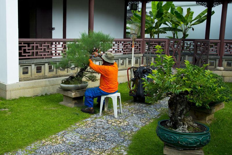 Bonsai Trees Pruning Singapore City Bonsai Plant Tree Pruning