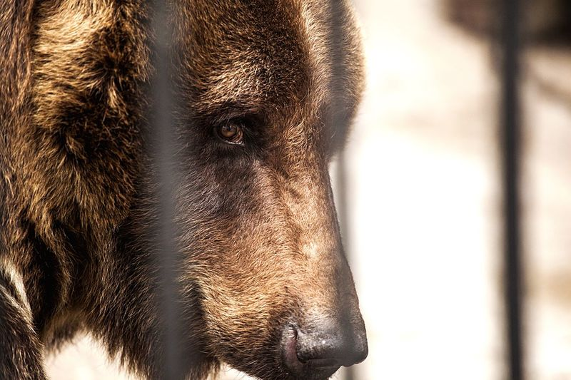 Close-up of bear in zoo