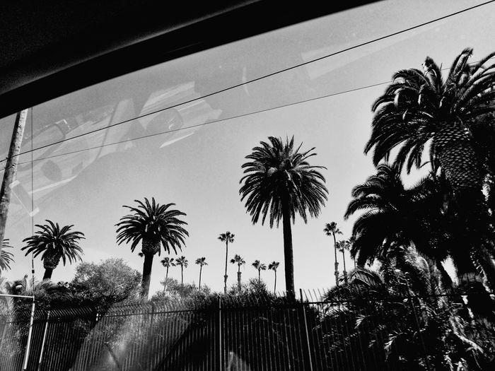 Tree Palm Tree Silhouette Sky