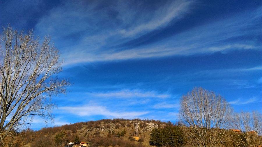 Sky Tree Growth