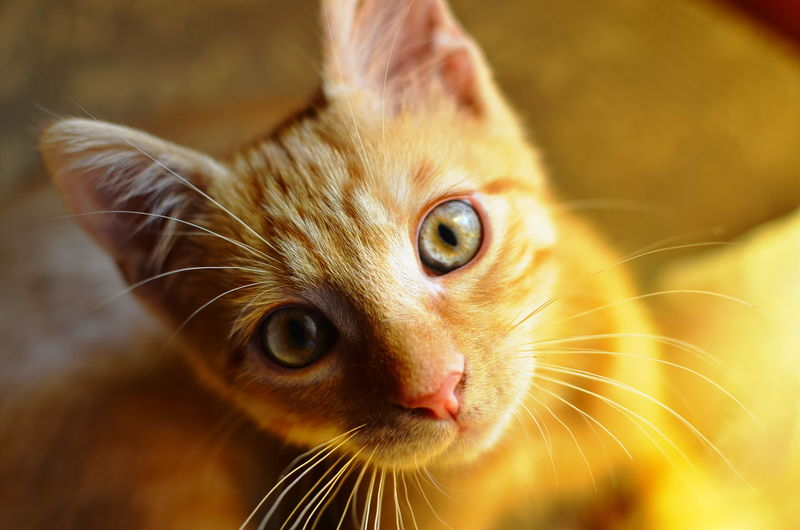 Animal Animal Body Part Cat Cat Lovers Cats Cats Of EyeEm Close-up Domestic Animals Pets Staring Cat♡ Catlovers Pet Pet Photography