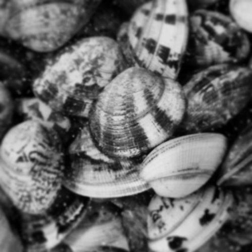 Black & White Contrasti Sardinia Seafood Shells
