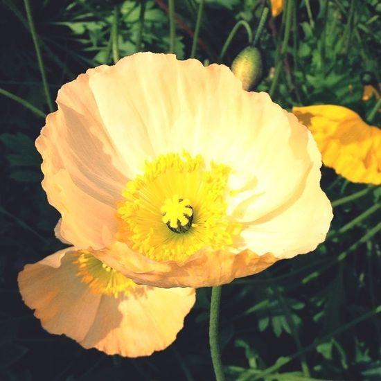 Flowers Nature Flower Porn Spring Flowers